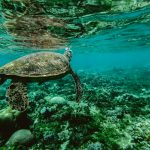 photo-of-a-turtle-underwater-847393